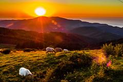 Atardecer en el alto de Sollube (carlosolmedillas) Tags: sunset red summer sun mountain sunrise landscape rojo paradise magic paisaje pasto verano sheet postal monte montaa bizkaia paraiso euskadi vizcaya oveja ovejas