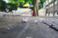 DSC06666 (Ansonless) Tags: lake green holiday guangzhou street warm hoilday summer sunny life power