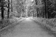 Waldweg (Christian Gttner) Tags: camera leica las light summer blackandwhite bw tree film nature monochrome analog forest 35mm germany landscape deutschland licht landscapes europa outdoor natur natura nrw sw analogue agfa landschaft wald tyskland baum trd umwelt drzewo svartvitt lato euregio leicacl schwarzweis niemcy czarnobiale schwarzweisfotografie moerschecodeveloper ecodeveloper