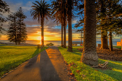 Sunrise Shelly Beach Sydney (600tom) Tags: beach park grass sunrise vivid orange pines path clouds reflections sun flair blue sky water ocean golden nikon glare brackets sydney australia
