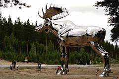 Elg - Moose - #2 (frode.vermedal) Tags: road people green norway metal big woods moose skog elg
