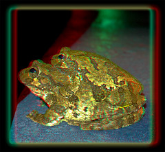 Moonlight Maneuvers 1 - Anaglyph 3D (DarkOnus) Tags: moonlight maneuvers pennsylvania buckscounty huawei mate8 cell phone 3d stereogram stereography stereo darkonus closeup macro frog treefrog eastern gray copes amphibian herp anaglyph