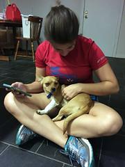 temporary dog 01 (tomsteele) Tags: dog tasha