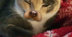 The dog filter on snapchat worked on my cat. via http://ift.tt/29KELz0 (dozhub) Tags: cat kitty kitten cute funny aww adorable cats