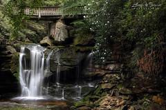 Blooming Rhodies (Larry W Brown) Tags: waterfall elakala1 elakalafalls upperelakala westvirginia blackwaterfallsstatepark canaanvalley rhododendron shaysrun rhodies appalachia