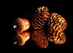 Fallen Treasures...MM (Through Serena's Lens) Tags: mm macromondays inthemirror reflection mirror acorn pinecones autumn fall still life treasures tabletop macro lighting