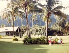 Bert Kim and Michael Playing Near the Palms - c1983 (kimstrezz) Tags: 1983 familytriptohawaiic1983 hanaleibay kauai kim michael bert