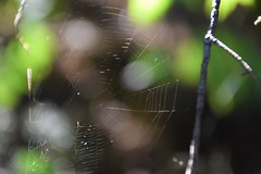 Gossamer (marensr) Tags: cobweb wee spider light forest michigan door county