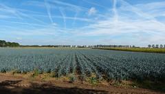 Enough leek for a cassarole.... (joeke pieters) Tags: 1300434 panasonicdmcfz150 akker field prei leek landschap landscape landschaft paysage noordbrabant nederland netherlands holland lucht sky