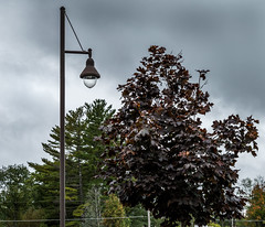 Lamp (1 of 1) (David James' Photography) Tags: lamp tree overcast sky beginner photography