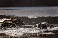 Some lungs (mattd85) Tags: scotland lochlomand fun water splash cold adventure portrait