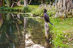 DSC_5398 (sergeysemendyaev) Tags: 2016 rio riodejaneiro brazil jardimbotanico botanicgarden     outdoor nature plants    bird  green  beauty  water