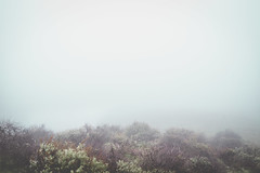 Fog's Floor.. (Rachelle Mendez) Tags: color fog photography losangeles ground minimal nakedlandscape thisiscalifornia