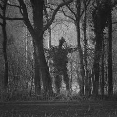 The wild wood watchman (andzwe) Tags: forest wood watchman watch drenthe netherlands nederland dutch spooky mysterieus mysterious spookachtig bewaker bos wacht guide trèsétrange silhouette greenman eng vogelverschrikker groeneman panasonicdmcgh4 panasoniclumixdmcgh4 © ©andzwe wickerman wittewieven