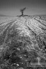 Lunar Light (Lewis Fackrell) Tags: mountain tree field wales mono solar eclipse blackwhite farm south hill cardiff harvest lone friday