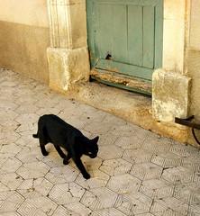 Dans la ruelle (apolloniacyclade) Tags: door portrait black colors animal cat chat noir couleurs lane porte ruelle provence