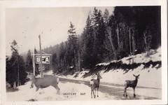 Boswell, Destiny Bay, deer, rppc, 1940s? (bbradleyaway) Tags: bc britishcolumbia nelson kootenays boswell