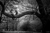 Confidences sur l'arbre (Explore) (RVBO) Tags: nb normandie jumièges