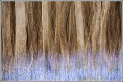 20150421. Scilla. Camera painting. 3826 (Tiina Gill (busy)) Tags: blue plant flower tree spring flora estonia scilla icm alder camerapainting intentionalcameramovement