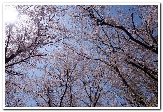 일산호수공원34