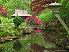 The Japanese garden of The Hague (Frans Schmit) Tags: pink reflection japanesegarden denhaag azalea thehague clingendael japansetuin fransschmit