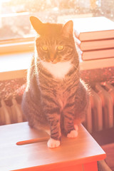 Cat in sunset (WillemijnB) Tags: sunset orange sun yellow cat jaune 50mm soleil zonsondergang kat feline chat sonnenuntergang diesel kachel kitty sunny books gelb gato flare katze stool geel processed livres ofen tabouret kruk oranje boeken bcher radiateur hss zonnig ensoleill barkruk eos70d sliderssunday