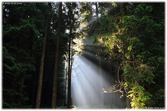 Lights - Luci (daril77) Tags: veneto vicenza italy italia altipiano asiago rays raggi montecorno