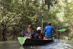_TEF6512 (Edson Grandisoli. Natureza e mais...) Tags: rio barco antena colar pintada ona rdio pesquisa amaznia solimes vrzea monitoramento regionorte pesquisador rdiocolar
