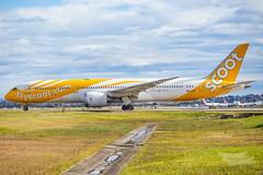 9V-OJF TZ B789 25 YSSY-1538 (A u s s i e P o m m) Tags: au australia mascot newsouthwales boeing syd scoot tz sydneyairport yssy b789 flyscoot