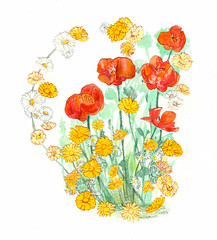 Wildflowers (Sharon Farrow) Tags: wildflowers flowers plants daisies poppies summer summertime decorative countryside paint pencil pen crayon oilpastel mixedmedia watercolour drawing pretty illustration illustratedfood illustratedflowers sharonfarrow nature silhouettes