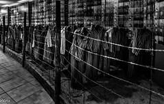 La legion de los condenados (Perurena) Tags: presos prisioneroscarcel prision campodeconcentracion exterminio nazis judios alambrada auswitch polonia