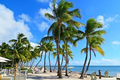 Key West (Florida) Trip 2015 7862Ri 4x6 (edgarandron - Busy!) Tags: florida keys floridakeys keywest higgsbeach casamarina