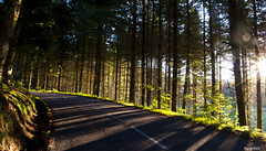 Route des sapins (Pics by mzx) Tags: route sapins pins rsineux fort soleil vert joie road fir pine resinous forest sun green joy