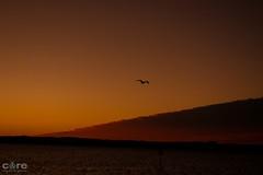 Gone to the birds part 4 (core_personal_training) Tags: australia nsw centralcoast theentrance sunset sun water sea lake jetty orange landscape bird wildlife animal clouds cloud dslr nikon nikond3300 nikkor1855 sky
