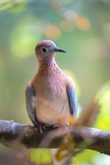 Spaycifique zoo (Hexilene) Tags: oiseaux nikon nikonpassion nature nikond750 jaune blueribbon bokey sigma inexplore blueribbonwinner