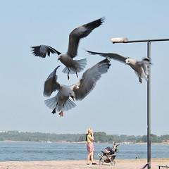 The birds :D (Flavio Calcagnini) Tags: suomenlinna finland finlandia woman birds sea seagulls child stroller molo pier street lamp photography helsinki