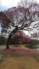 20160811_110622 (filipealves1) Tags: sopaulo trees nature natureza parque ibirapuera brazil brasil