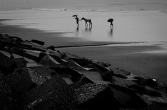 Chittagang 2015 (Extinted DiPu) Tags: sea beach longest chittagang lifestyle lifestyleofbangladesghipeople ocean open outdoor monochrome blackandwhite photography fotografie horse people brick sand scout exploring inexplore flickrriver
