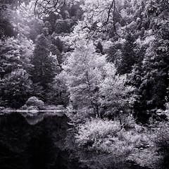 lac - Vosges (JJ_REY) Tags: lac fishbdle vosges montagnes mountains yashicamat124g 6x6 bw alsace france fra lake