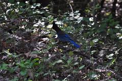 DSC_0403 (oblomberg) Tags: bigsur hwy1 pfeifferstatepark montereyca