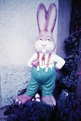 Easter Bunny Senior