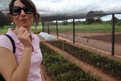 Ka'a He'ë en Paraguay02