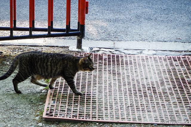 Today's Cat@2015-05-05