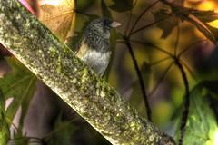 Bird Gets Bug (swong95765) Tags: lighting bird beauty bug pretty branch canopy hdr alert
