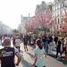 Marathon Paris 2015 by Laurent Tiné: Cerisiers en fleurs rue de rivoli