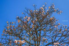 Spring (Sougata2013) Tags: india mountain flower nature colors spring nikon hill mandi himachalpradesh nikond3200 prashar tungamatatemple