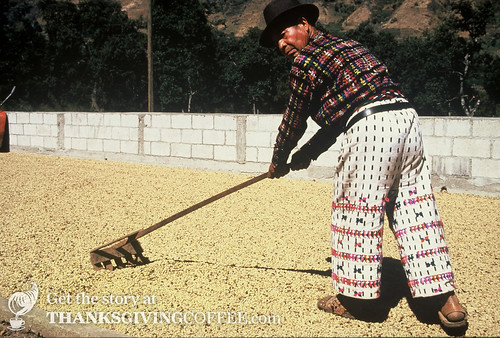 A Guatemalan Elder Turns Coffee