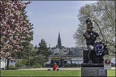 Bonn-Kirschbluete-28 (kurvenalbn) Tags: deutschland bonn pflanzen blumen nordrheinwestfalen frhling kirschbluete