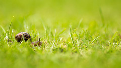 On the Move (aveyardphotography) Tags: snail shell nature water droplets rain wet green grass light shallow focus soft bokeh
