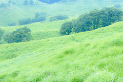 2Tonomine Highland (anglo10) Tags:    field  japan
